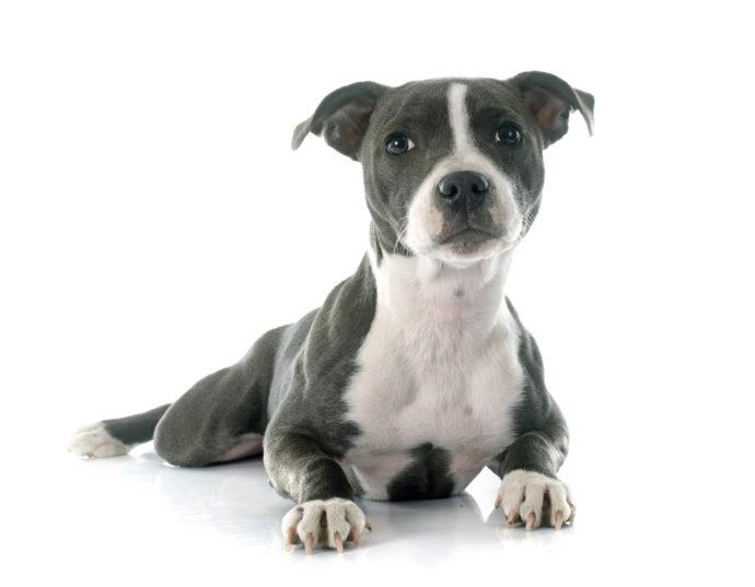 Ziel bester Versicherungsmakler und Finanzberater in Duisburg Versicherungen Hundehalterhaftpflicht Hundehaftpflicht.jpg